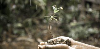 hands holding a sapling